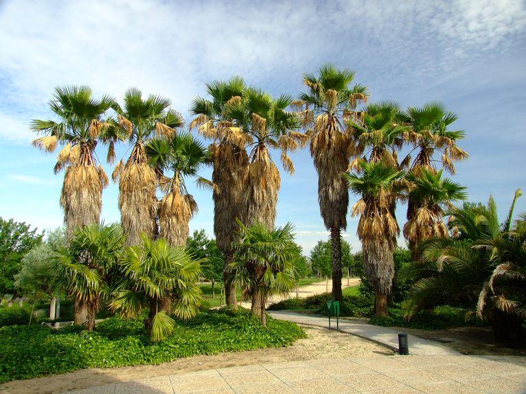 Jard n de las tres culturas for Jardines con palmeras